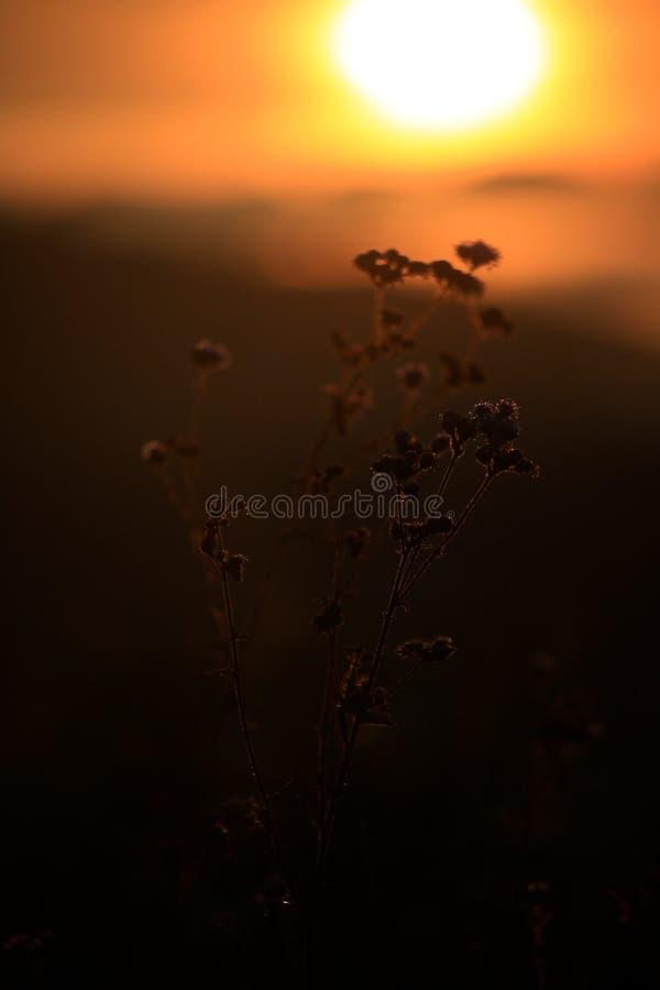 Υπόβαθρο με τα ζιζάνια και μαγικός του φωτός στο μέρος 8 αυγής στοκ φωτογραφία
