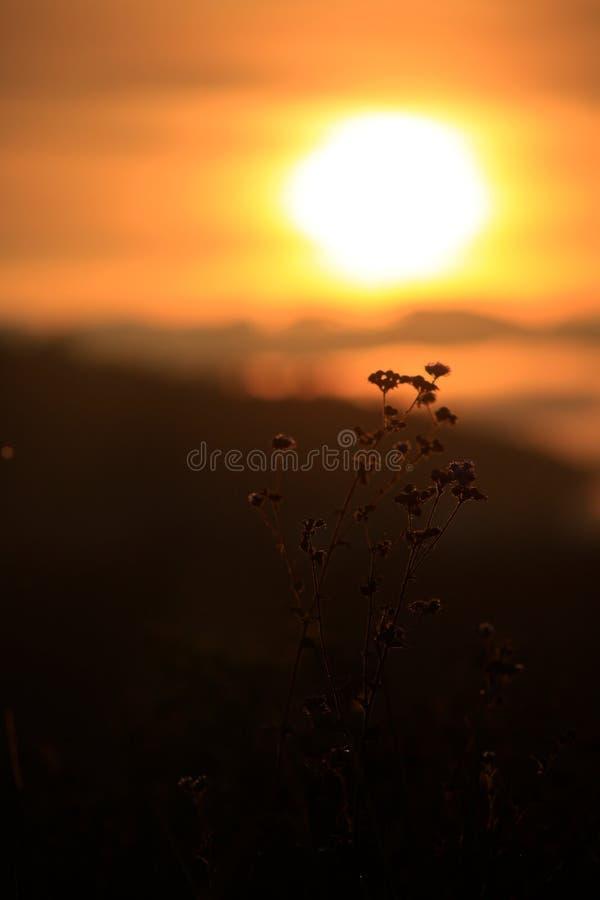 Υπόβαθρο με τα ζιζάνια και μαγικός του φωτός στο μέρος 10 αυγής στοκ εικόνες