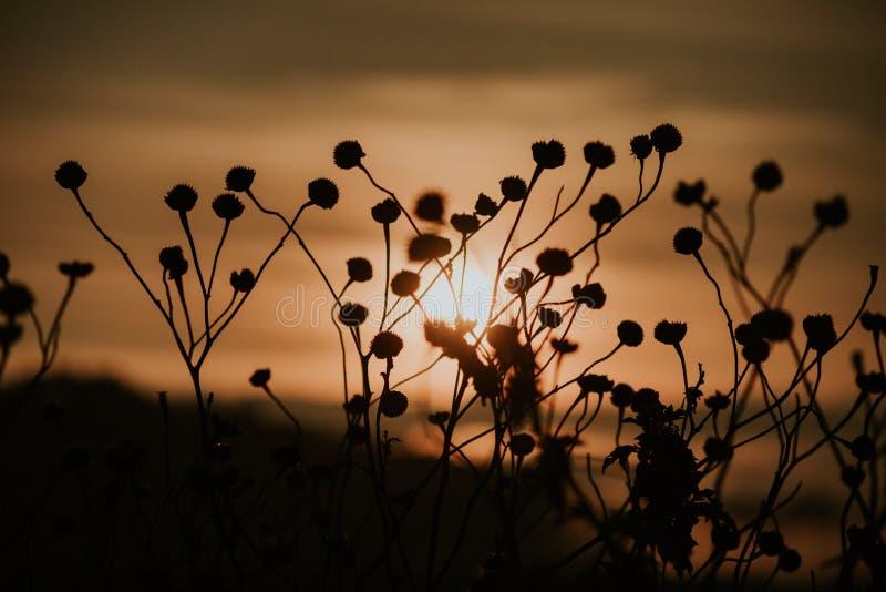 Υπόβαθρο με τα ζιζάνια και μαγικός του φωτός στο μέρος 11 αυγής στοκ φωτογραφία με δικαίωμα ελεύθερης χρήσης