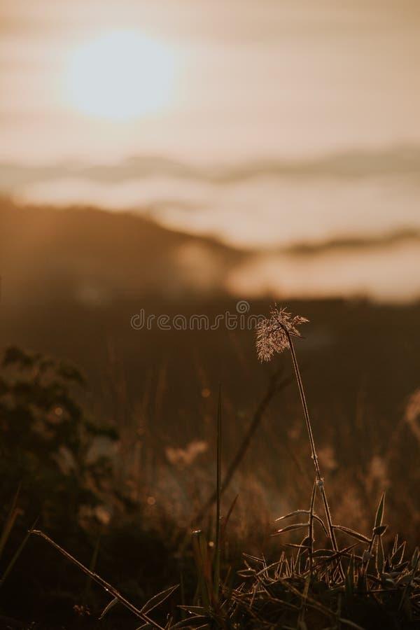 Υπόβαθρο με τα ζιζάνια και μαγικός του φωτός στο μέρος 19 αυγής στοκ φωτογραφίες με δικαίωμα ελεύθερης χρήσης