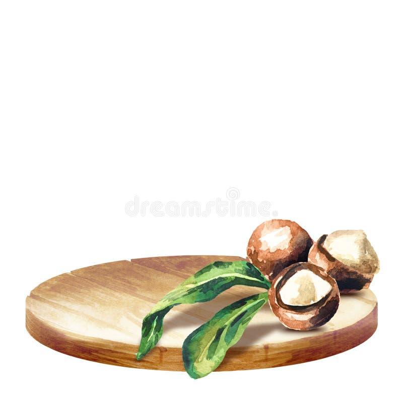 Υπόβαθρο με τα καρύδια πιατελών και macadamia στοκ εικόνες