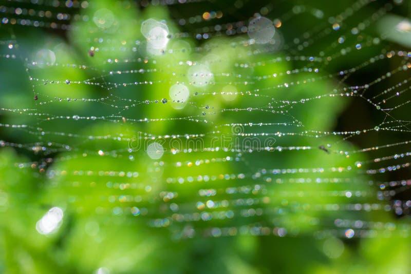 Υπόβαθρο με την άνοιξη πρωινού ή θερινή δροσιά σε έναν ιστό αράχνης στοκ φωτογραφία