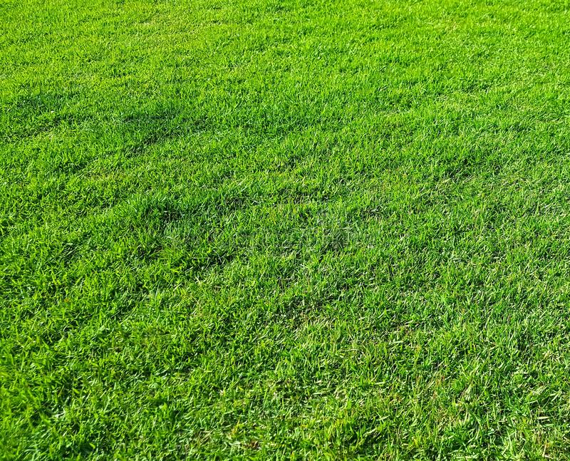 Υπόβαθρο με την πράσινη ανάπτυξη χλόης σε έναν χορτοτάπητα σε ένα πάρκο πόλεων, λαμπρά αναμμένο από τον ήλιο στοκ φωτογραφία με δικαίωμα ελεύθερης χρήσης