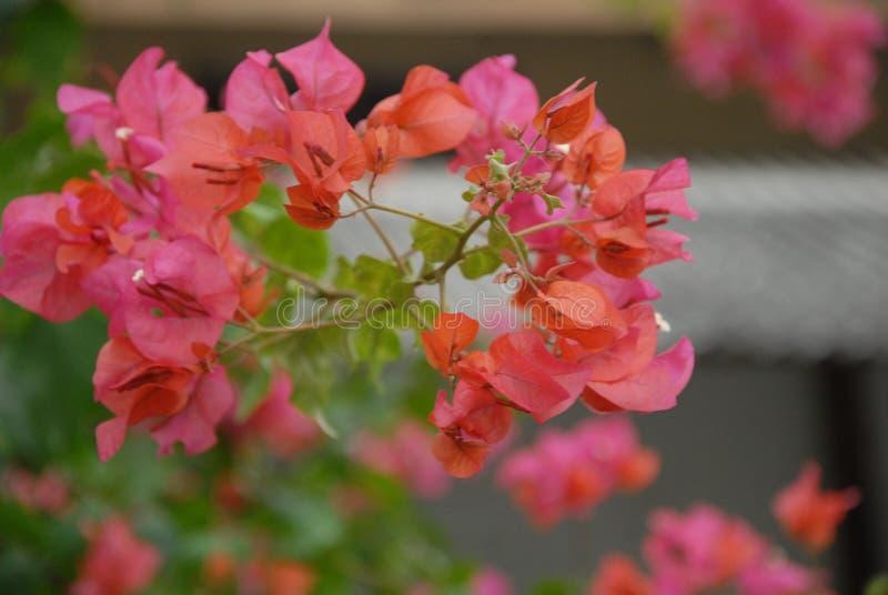 Υπόβαθρο με τη φύση ύφους λουλουδιών στοκ εικόνες με δικαίωμα ελεύθερης χρήσης