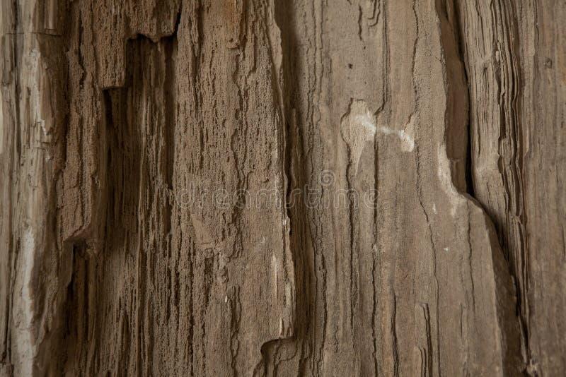Υπόβαθρο με το πετρώνω ξύλο από ένα δέντρο απολιθωμένο δέντρο στοκ εικόνες