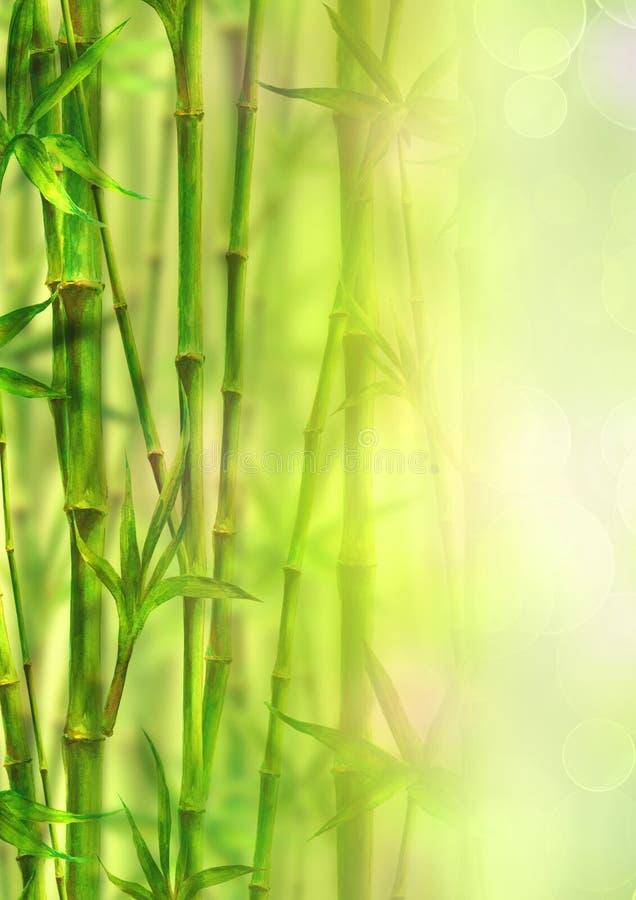 Υπόβαθρο μπαμπού forest spa Συρμένη πράσινη χέρι βοτανική απεικόνιση Watercolor με το διάστημα για το κείμενο στοκ εικόνα με δικαίωμα ελεύθερης χρήσης