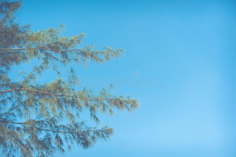 Υπόβαθρο μπλε ουρανού φύλλων φθινοπώρου στοκ εικόνες