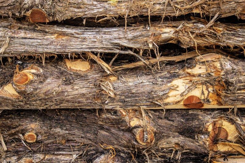Υπόβαθρο ξυλείας κέδρων στοκ εικόνες
