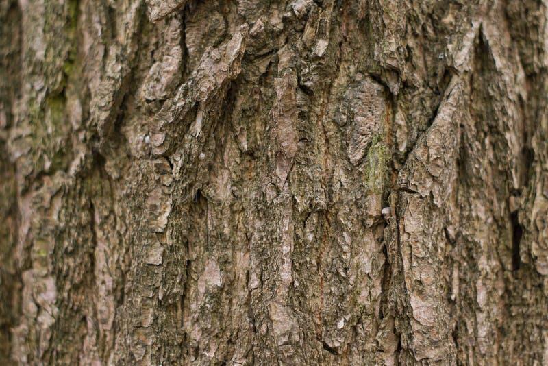 υπόβαθρο, ξύλινος φλοιός, ξύλο στοκ φωτογραφίες με δικαίωμα ελεύθερης χρήσης