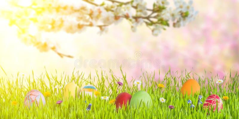 Υπόβαθρο Πάσχας με τα αυγά και τον ανθίζοντας κλάδο στοκ εικόνες