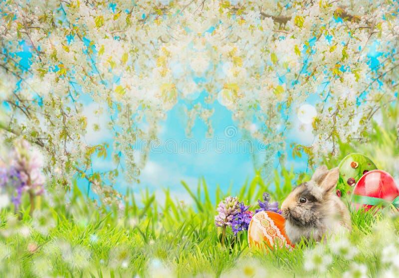 Υπόβαθρο Πάσχας με τα αυγά, χνουδωτό κουνέλι στη χλόη, λουλούδια και φύση ανθών άνοιξη στοκ φωτογραφία
