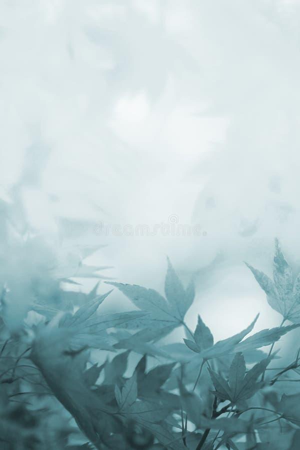 Υπόβαθρο πένθους με τα φύλλα σφενδάμου στις σκιές του γκρι στοκ εικόνες