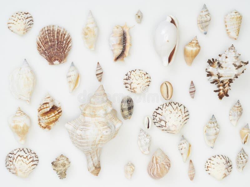 Υπόβαθρο που γίνεται από τα κοχύλια θάλασσας στοκ φωτογραφίες