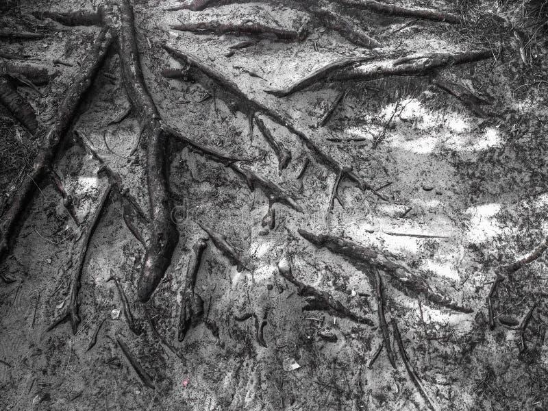 Υπόβαθρο ριζών δέντρων Στοκ Εικόνες