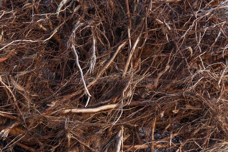Υπόβαθρο ριζών δέντρων στοκ φωτογραφίες