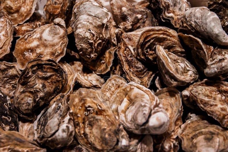 Υπόβαθρο στρειδιών, τοπ άποψη της φρέσκιας Shell στην αγορά ψαριών στοκ εικόνα