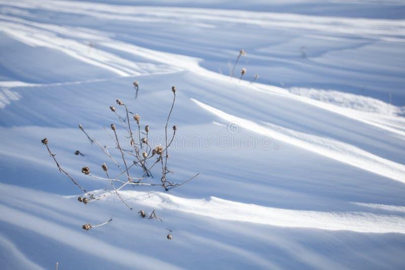 Υπόβαθρο στρωμάτων χιονιού στοκ εικόνα