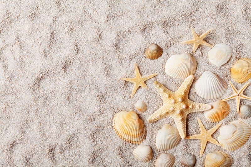 Υπόβαθρο ταξιδιού την αμμώδη παραλία που διακοσμείται από με τον αστερία και το θαλασσινό κοχύλι Τοπ όψη στοκ εικόνα