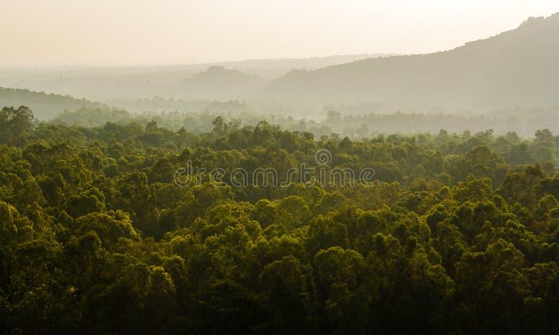 Υπόβαθρο της Misty και πράσινο πρώτο πλάνο στοκ εικόνες με δικαίωμα ελεύθερης χρήσης