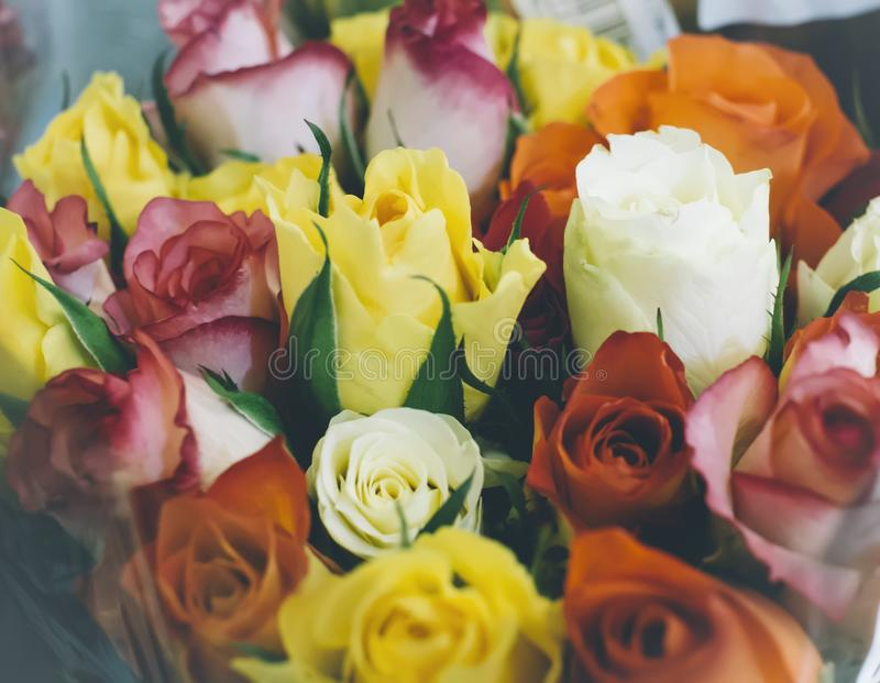 Υπόβαθρο τοπ άποψης κινηματογραφήσεων σε πρώτο πλάνο τριαντάφυλλων της πορτοκαλιάς, πρότυπο υποβάθρου, έννοια λουλουδιών στοκ εικόνες