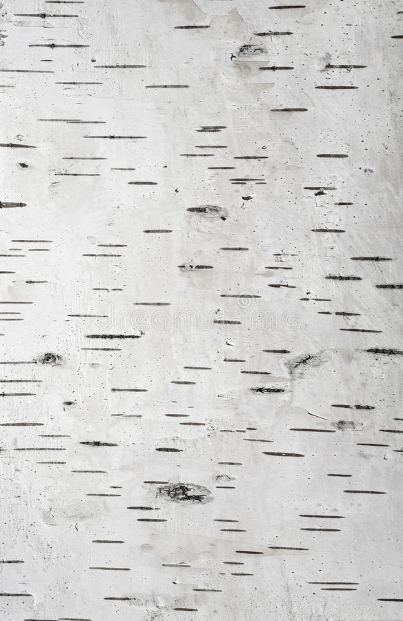 Υπόβαθρο του φλοιού σημύδων στοκ φωτογραφίες με δικαίωμα ελεύθερης χρήσης