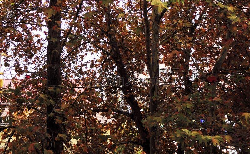 Υπόβαθρο των δέντρων στον υπολογιστή γραφείου στοκ εικόνες