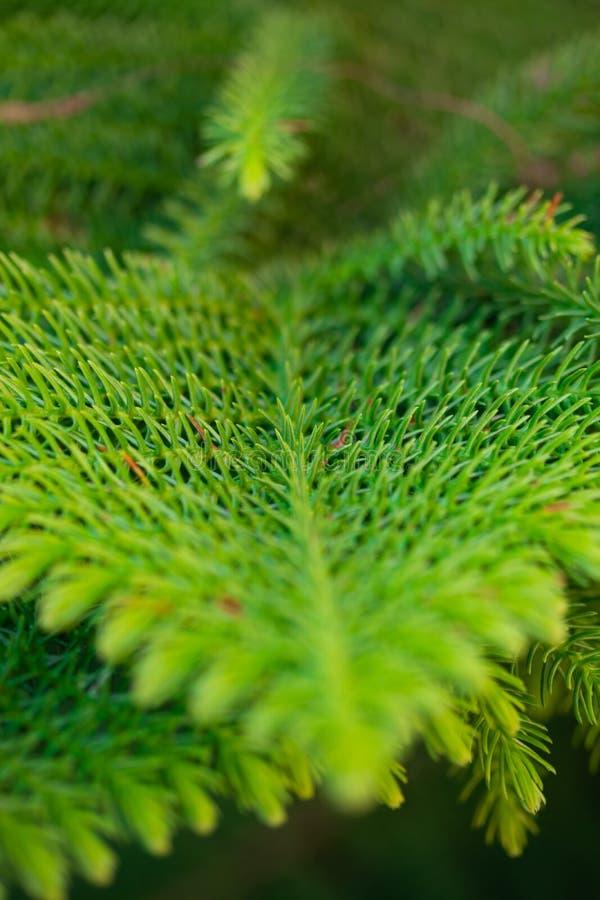 Υπόβαθρο των κλάδων ενός ζωηρού χνουδωτού χριστουγεννιάτικου δέντρου στοκ εικόνα