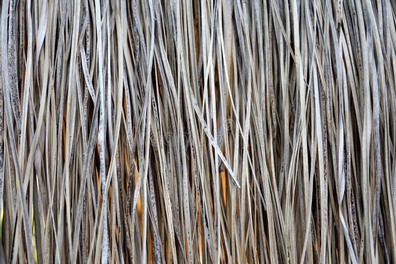 Υπόβαθρο των ξηρών καλάμων στοκ εικόνες