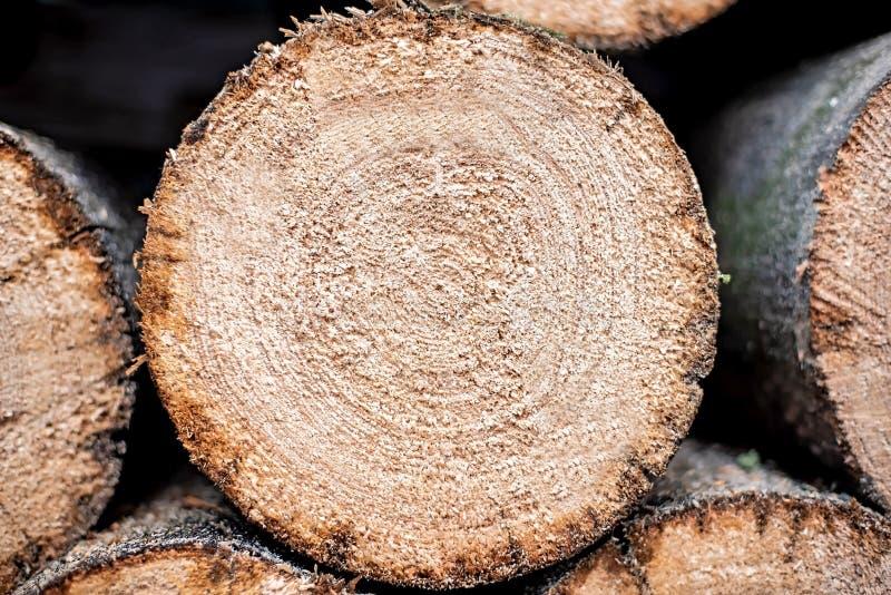 Υπόβαθρο των ξηρών τεμαχισμένων κούτσουρων καυσόξυλου που συσσωρεύονται επάνω ο ένας πάνω από τον άλλον σε έναν σωρό στοκ φωτογραφία με δικαίωμα ελεύθερης χρήσης