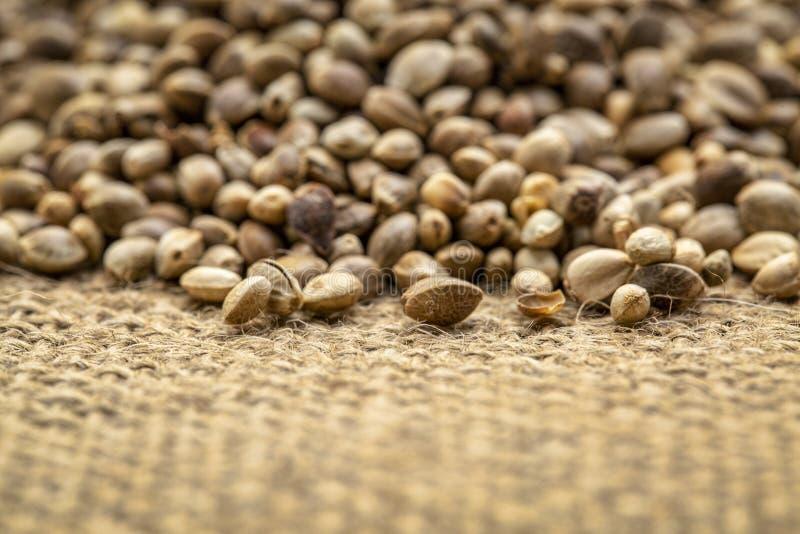 Υπόβαθρο των οργανικών ξηρών σπόρων κάνναβης στοκ εικόνα