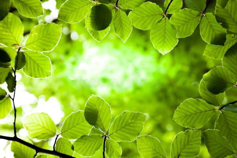 Υπόβαθρο των πράσινων φύλλων στοκ εικόνα