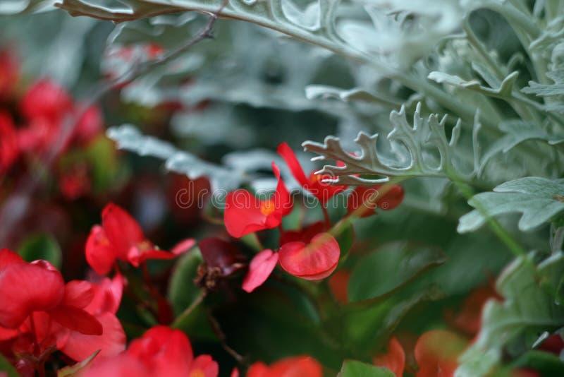 Υπόβαθρο των φωτεινών χρωμάτων της κόκκινης και πράσινης αφαίρεσης φωτογραφίας βρύου μακρο στοκ φωτογραφίες με δικαίωμα ελεύθερης χρήσης