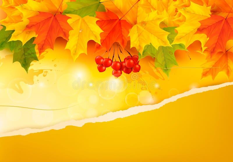 Υπόβαθρο φθινοπώρου με τα ζωηρόχρωμα φύλλα και σχισμένος  ελεύθερη απεικόνιση δικαιώματος