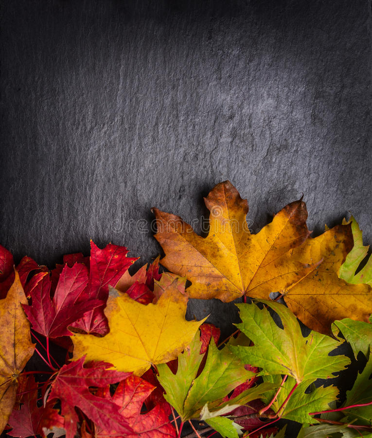 Υπόβαθρο φθινοπώρου με τα ζωηρόχρωμα φύλλα φθινοπώρου στη σκοτεινή πλάκα στοκ φωτογραφίες