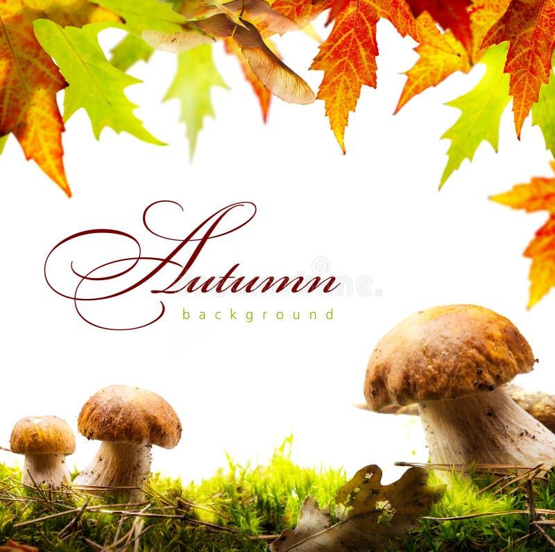 Υπόβαθρο φθινοπώρου με τα κίτρινα φύλλα και το μανιτάρι φθινοπώρου στοκ εικόνα με δικαίωμα ελεύθερης χρήσης