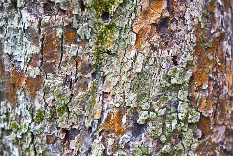 Υπόβαθρο, φλοιός δέντρων μηλιάς σύστασης, πράσινο βρύο στοκ φωτογραφία με δικαίωμα ελεύθερης χρήσης