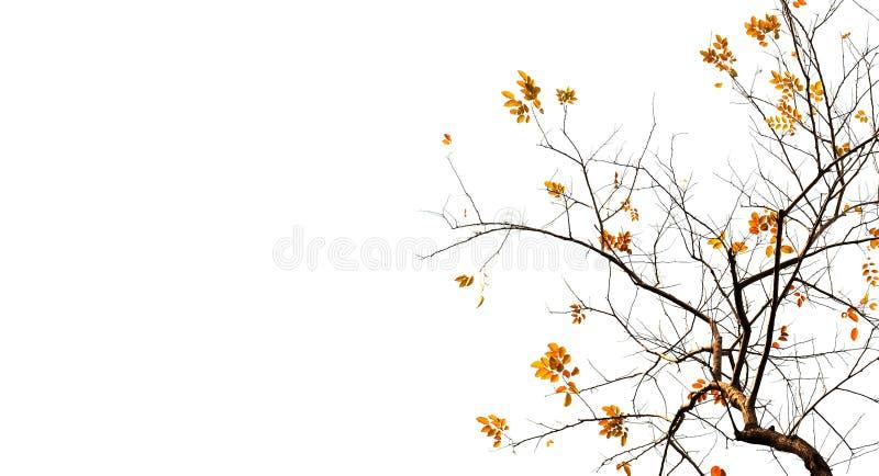 Υπόβαθρο φύλλων φθινοπώρου στοκ φωτογραφίες