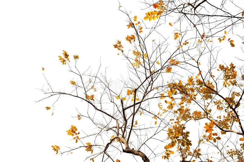 Υπόβαθρο φύλλων φθινοπώρου στοκ φωτογραφίες με δικαίωμα ελεύθερης χρήσης