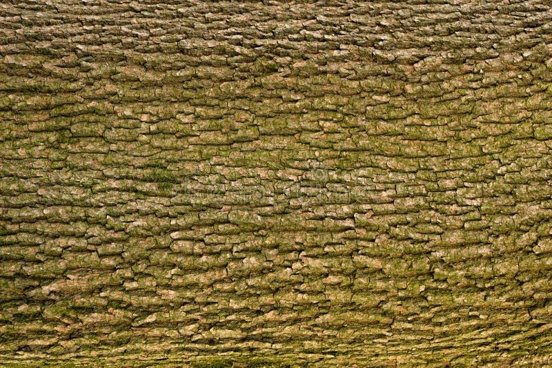 Υπόβαθρο φλοιών δέντρων στοκ φωτογραφίες με δικαίωμα ελεύθερης χρήσης