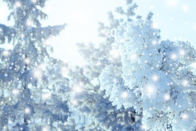 Υπόβαθρο Χριστουγέννων με τα χιονώδη δέντρα έλατου στοκ εικόνα