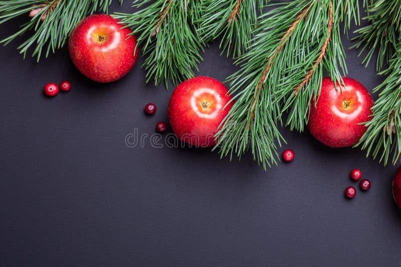 Υπόβαθρο Χριστουγέννων με τους κλάδους δέντρων, τα κόκκινα μήλα και τα τα βακκίνια Σκοτεινός ξύλινος πίνακας στοκ εικόνες