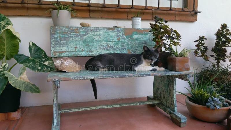 Υπόλοιπο γατών στοκ φωτογραφίες με δικαίωμα ελεύθερης χρήσης