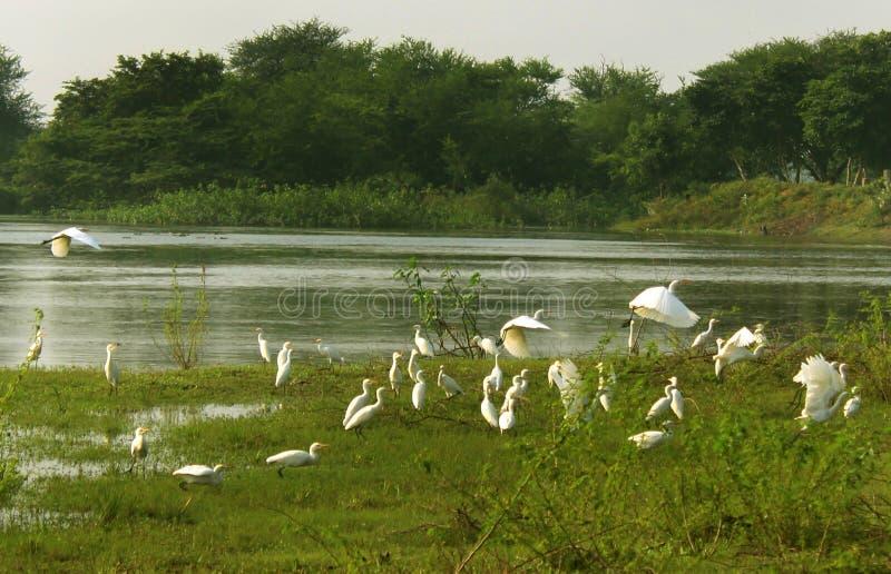 Υπόλοιπο πουλιών πετάγματος στο άδυτο πουλιών στοκ εικόνες με δικαίωμα ελεύθερης χρήσης