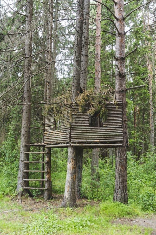Υπόστεγο σε ένα δέντρο στο δάσος στοκ φωτογραφίες