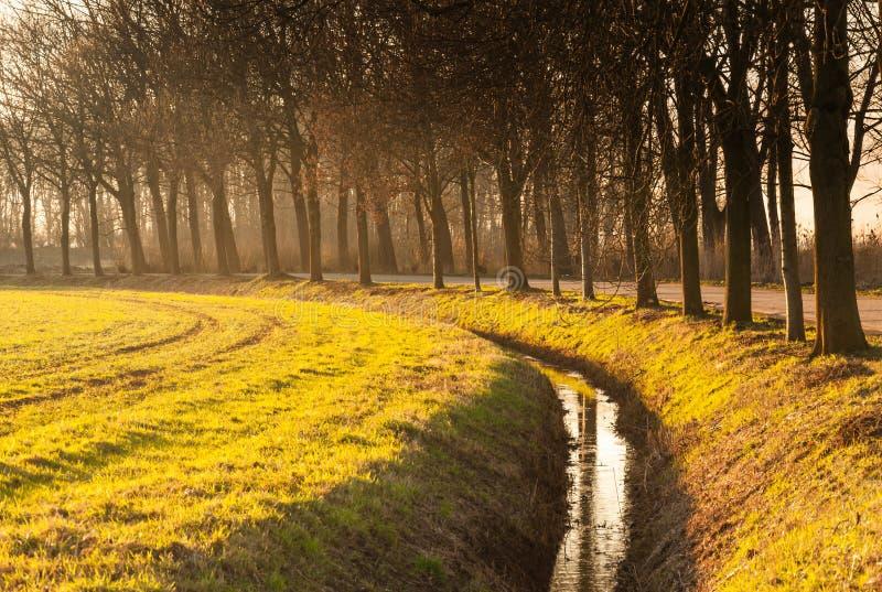 Υπόλοιπος κόσμος των δέντρων εκτός από μια κυρτή τάφρο στοκ φωτογραφία