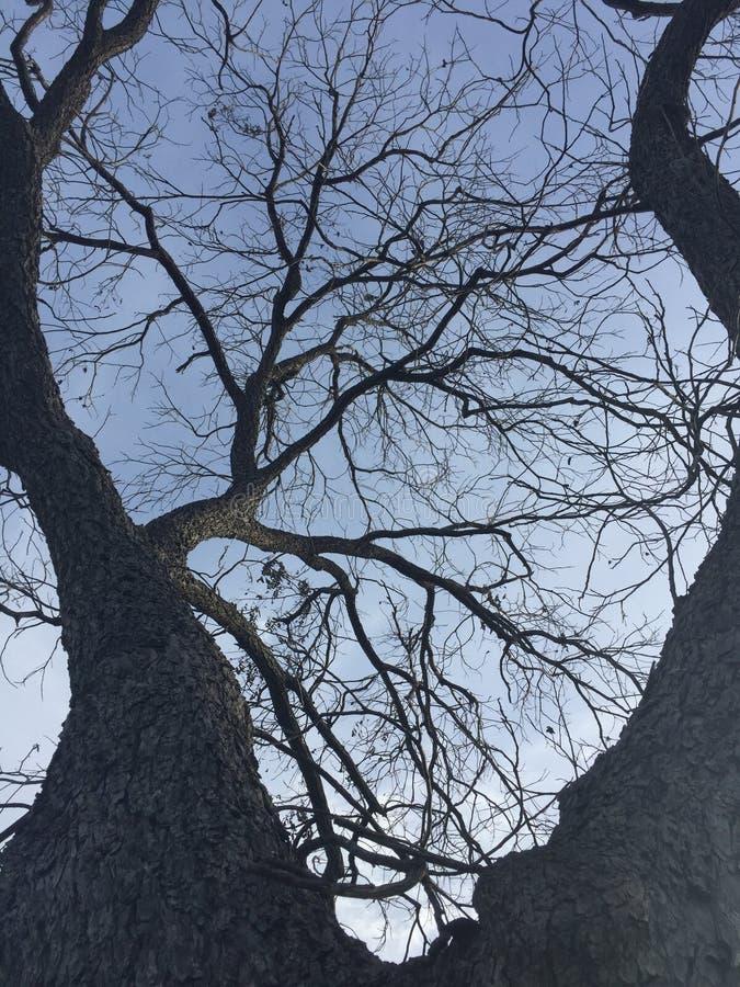 δυσοίωνο δέντρο στοκ φωτογραφία