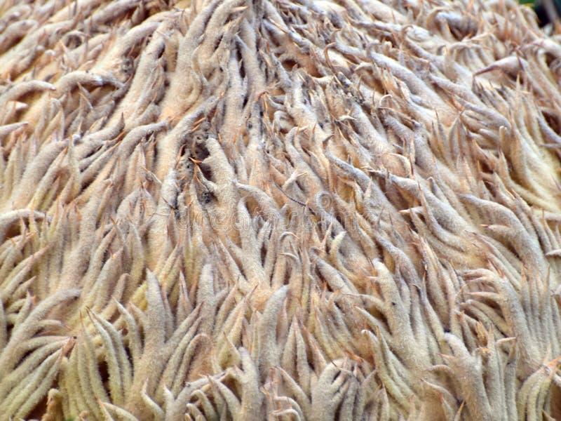 Υφή του άνθους Cycas στοκ φωτογραφίες με δικαίωμα ελεύθερης χρήσης