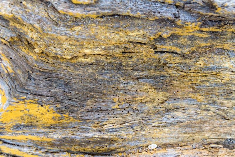 Υφή φλοιού ξύλου από παλιό, ξηρό, κίτρινο ζωγραφισμένο δέντρο, χρήση ως φυσικό φόντο στοκ φωτογραφία με δικαίωμα ελεύθερης χρήσης
