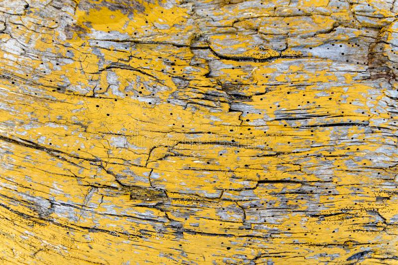 Υφή φλοιού ξύλου από παλιό, ξηρό, κίτρινο ζωγραφισμένο δέντρο, χρήση ως φυσικό φόντο στοκ φωτογραφίες