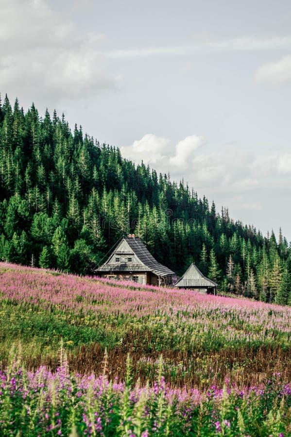 Υψηλά βουνά Tatra στοκ εικόνες